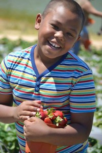 strawberry-picker